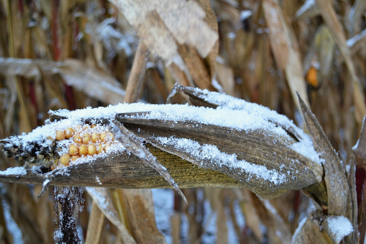 "Officials Are Using the Word ""Disaster"" to Describe the Widespread Crop Failures Happening all over America"
