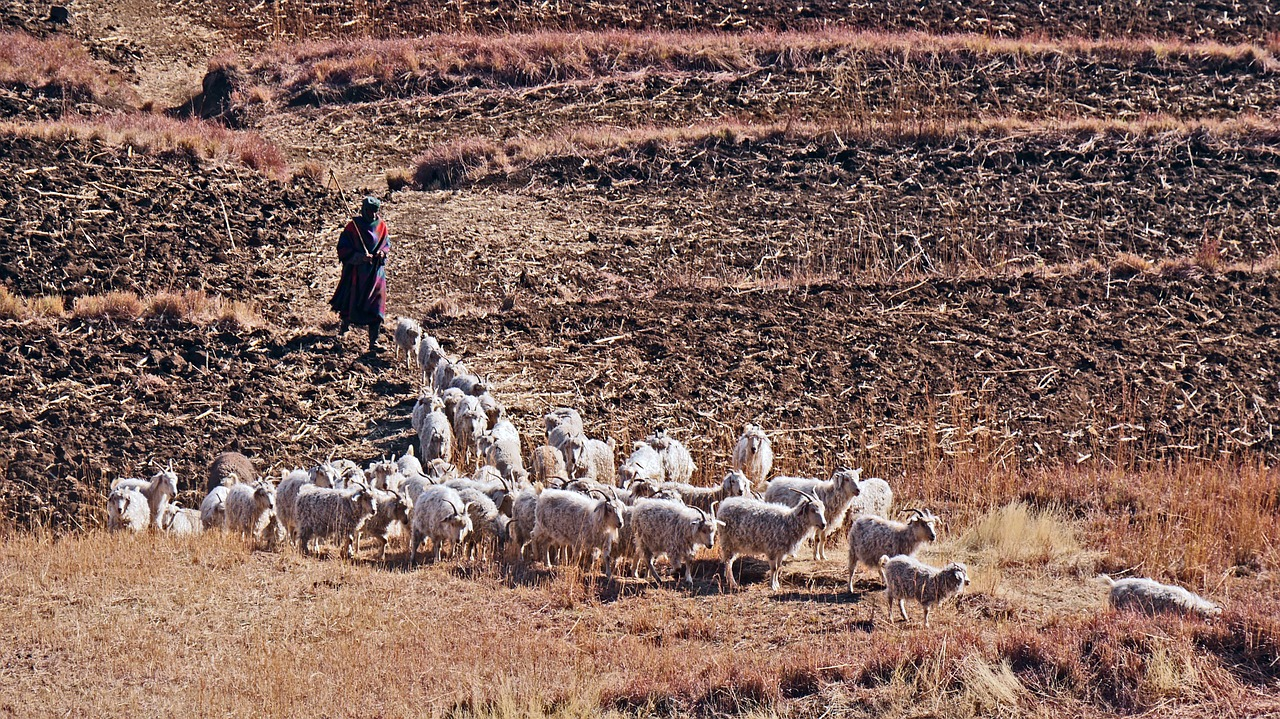 Fight Breaks out in Lesotho Parliament over Wool and Mohair Regulations