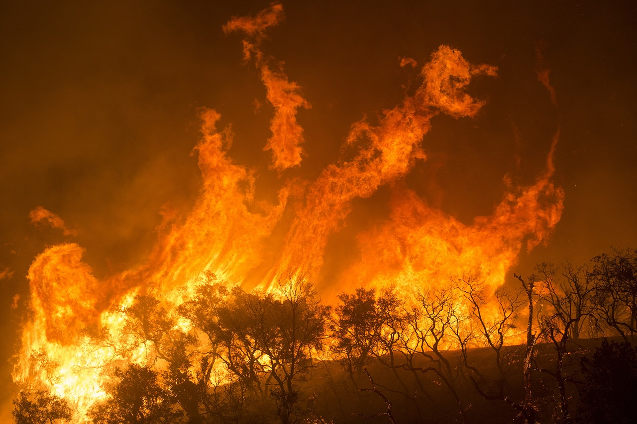 "A Billion Dead Animals: Under a ""Blazing Red Sky"" in Australia, Apocalyptic Wildfires Are Killing Koalas, Kangaroos and Countless Other Creatures"