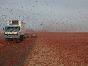 "Three Hundred and Sixty Billion Locusts and Growing: A Plague of ""Biblical Proportions"" Is Destroying Crops across the Middle East and Africa"