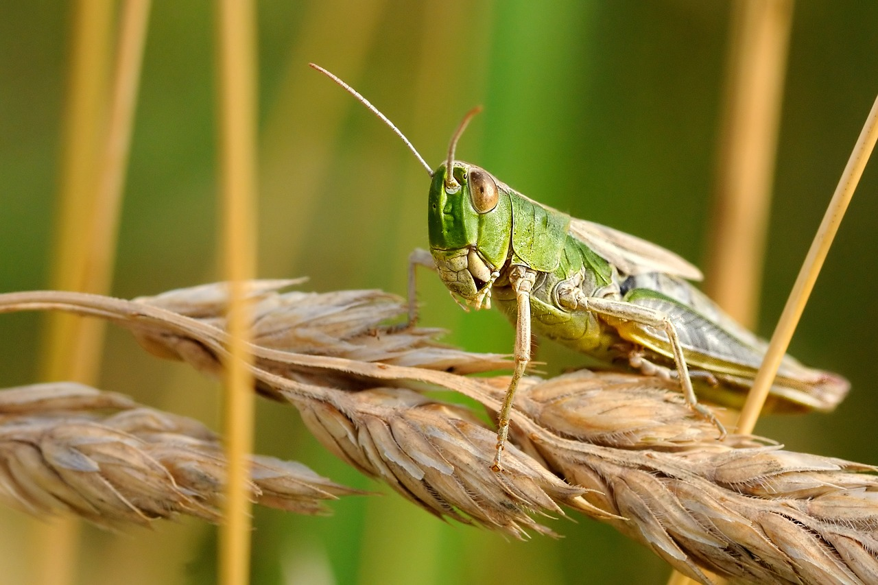 "The Next Generation: Giant Locust Armies of ""Biblical Proportions"" Threaten to Cause Mass Starvation in Africa"
